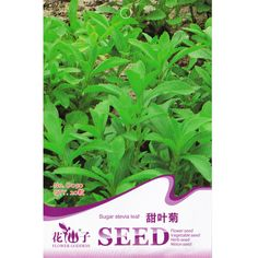 Stevia Seed * 20 Seeds * Free Shipping * Stevia rebaudiana * Sugar Stevia Leaf * Herb Seeds * Honey leaf * Sweet herb *Perennial
