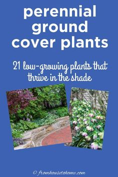 Great list of perennial ground cover plants that love the shade! There are so many different options that are low maintenance and will help prevent weeds in my garden.