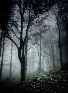 Mists and Fog in a Forest Image Nature, Nature Photos, Dark Places, Belle Photo, Dark Side, Mists, Woodland, Nature Photography, Fantasy Photography
