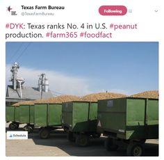 #DYK: Texas ranks No. 4 in U.S. #peanut production. #farm365 #foodfact