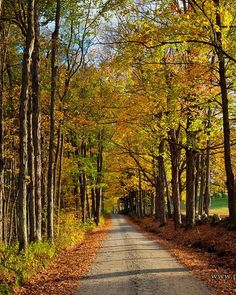 Bradley Road in Chesterfield was glowing in the evening sun today. Beautiful Streets, Beautiful Places, Beautiful Pictures, October Country, Forest Path, Magic Forest, Autumn Scenery, Natural, Watercolor Landscape