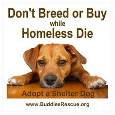 Adopt a Shelter Dog. For every dog we manage to save, thousands more are being killed each day; just in the United States. PLEASE don't breed more pitties doomed for the gas chambers or worse when people tire of them. Adopt from a shelter, or rescue center. Thank you!!!