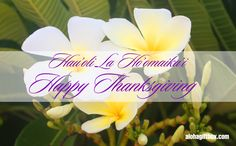 Hawaii Happy Thanksgiving card with tropical white plumeria flowers.