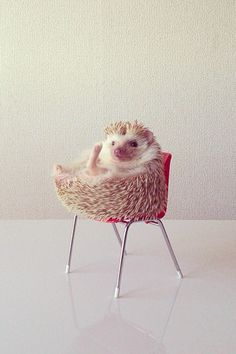 Hedgehog loves tiny furniture! Create your own animal board today with your favorite links! You can visit more at our animal board!