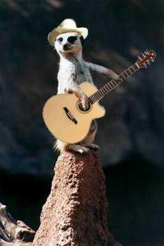 I want a Meerkat