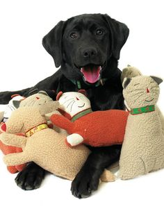 The Best Toys for Playful Cats and Dogs: A little noise can be fine, especially when its wrapped inside an adorable soft Leaping Dog Cuddle Toy from a href=http://upcountryinc.com target=_blankUp Country/a. The squeaker and crackle are inside this dog toy thats made in the USA. From DIYnetwork.com