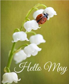Good bye April, hello May. May your life be happy, May your body be healthy, May… – Sprüche – Primavera Birthday Month Flowers, Neuer Monat, Happy May, Spring Wedding Flowers, Your Soul, Strong Love, New Month, Flower Quotes, Flower Aesthetic