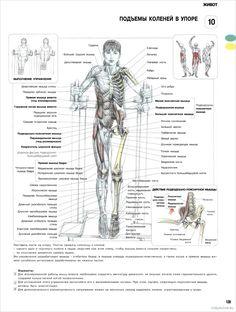 10. Подъемы коленей в упоре