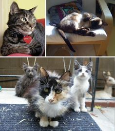 Adopt-A-Cat Month