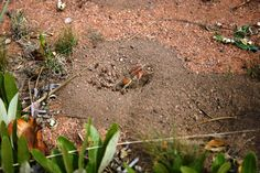 Spinne; unbekannte Art auf der Jagd nach Ameisen