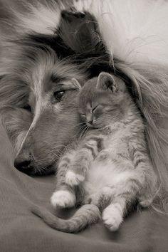 23 New Friendships That Will Last Forever Amor....Amor....Amor....Amor....