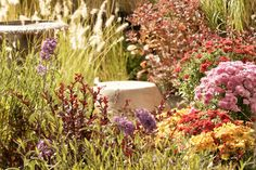 High Desert Gardening - our three challenges: soil, climate, and water (that's all!)