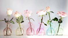 Roses Flowers Jars