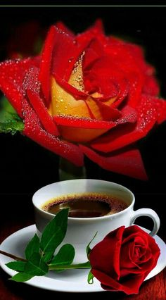 Photo effects combo by Tudora Stemate on Photo Lab Good Morning Roses, Good Morning My Love, Good Morning Coffee, Good Morning Images, Coffee Time, Happy Weekend Quotes, Funny Good Morning Quotes, Happy Birthday Flower, Flower Phone Wallpaper