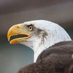 #Eagle #bird #majastic_moment #tierfotografie #animalphotography #zoo #hannover #innerpeace #summer #sunny #sunday