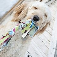 Homemade dog toy-I should make these for my doggies, would for sure save me money.