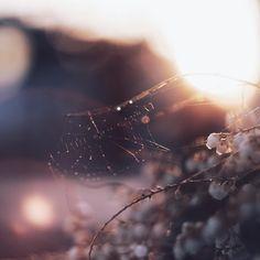 * * * * 夕飯の準備してたら窓から見える夕陽が綺麗だったのでエプロン姿のサンダル履きでお庭にダッシュ-=≡ヘ(*・ω・)ノ * * * お花も咲いてきたし生き物も活発になってきて嬉しいな☺️ * * * #安心してください #蜘蛛は留守でしたよ #nat_archive#bokeh#goexplore#splendid_people#macrophotography#naturephotography#iheartnature#instagoodmyphoto#shootermag_japan#artofvisuals#lifeofadventure#ig_captures#igmasters#spiderweb#spider#オールドレンズ#ヘリオス44#蜘蛛の巣#as_bokeh2016#一応フレアが入ってるけどよくわからんな