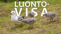 Tunnistatko sinä nämä kuusi yleistä lintua ja kasvia? – Testaa tietosi Ylen Luontovisassa   Yle Uutiset   yle.fi Closer To Nature, Picture Video, Bird, Pictures, Animals, Science, Education, Photos, Animales