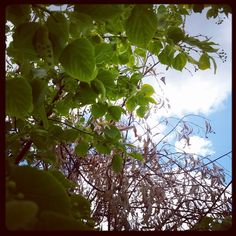Nova et vetera Nova, Fruit, Plants, Instagram, Plant, Planets