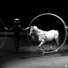 circus pony