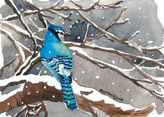 ACEO Limited Edition 2/25- Winter bluejay, Bird art print of an original watercolor by Anna Lee, Gift idea for bird lovers