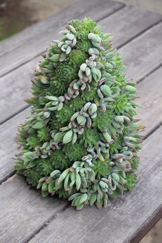 The other green for the holidays: Succulents - The Washington Post
