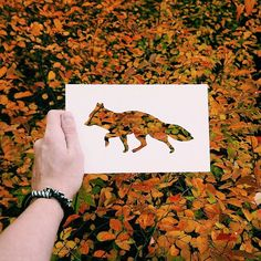 Nikolai Tolstyh • Paper Cut Animal Silhouettes • Fox