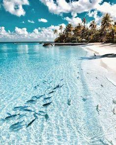 Beautiful Islands, Beautiful Beaches, Beautiful World, Beautiful Ocean, Animals Beautiful, Beach Aesthetic, Travel Aesthetic, Summer Aesthetic, Blue Aesthetic