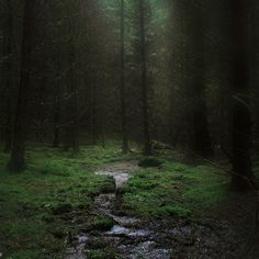 Green Forest #Dark
