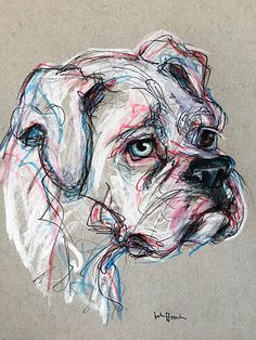 Sarge the Great White Boxer Pet Portrait Sketches - pencil, pen and colored pencil on gray toned paper www.juliepfirsch.com