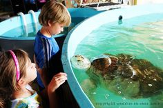 Family Friendly South Padre Island: Turtle Rescue Center (small donation)