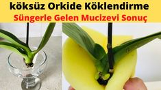 Plant Care, Celery, Orchids, Vegetables, Youtube, Gardens, Yellow Flowers, Creative Crafts, Deco