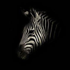 Los oscuros y enigmáticos animales de Alex Teuscher