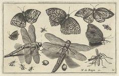 Vlinders en libellen, anoniem, Claes Jansz. Visscher (II), 1594 - 1644