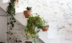 Exterior de la casa plantas España Laia Aguilar