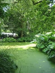 foto,s botanische tuin Delft - Google zoeken