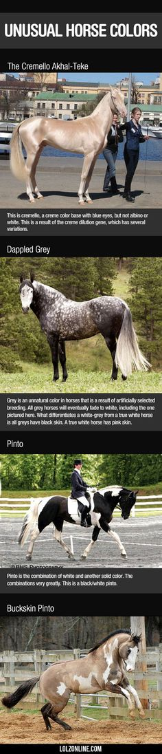 Unusual Horse Colors...