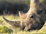 Two rhino poachers jailed for 29 years each