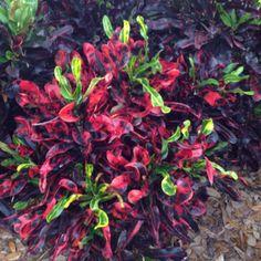 37 Best House Plants For Bright Light Images On Pinterest 640 x 480
