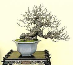Cayhoa.com - Thông tin về cây cảnh - cây hoa - kinh nghiệm và phương pháp trồng cây