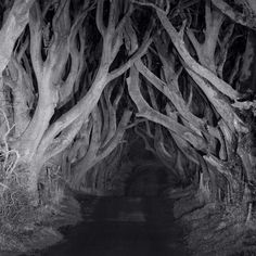 The Dark Hedges in Co Antrim, N Ireland ..at night.   The Dark Hedges is an avenue of 300 year old beech trees.