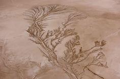 Jassen T. - Tree of Life. Koehn Lake at Sunrise. Aerial Image.