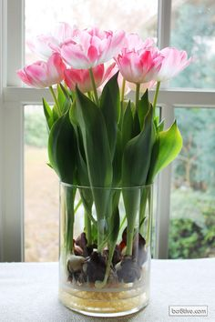 Forced Tulips chill for a few weeks , use marbles or pebbles in vase bury the bulb and fill with water just to bottom of bulb and wait. Make sure vase always has water