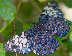 """""""Cracker Butterfly"""" by Bob Decker"""