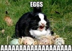 30 Funny animal captions - part funny animal memes, funny animals, funny memes, animal pictures Funny Easter Memes, Funny Easter Bunny, Funny Bunnies, Funny Animal Memes, Funny Animal Pictures, Funny Photos, Funny Animals, Cute Animals, Happy Easter