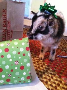 i goat you a present