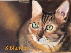 Sylvie-Blandin - Artiste Peintre : dessin pastel - Portrait de chat