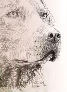 Chesapeake Bay Retriever Website, est. 1994 - forums - training - puppies - breeders