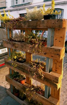 Plants in a pallet