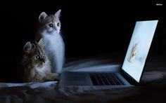 cats watching - cat, funny wall background